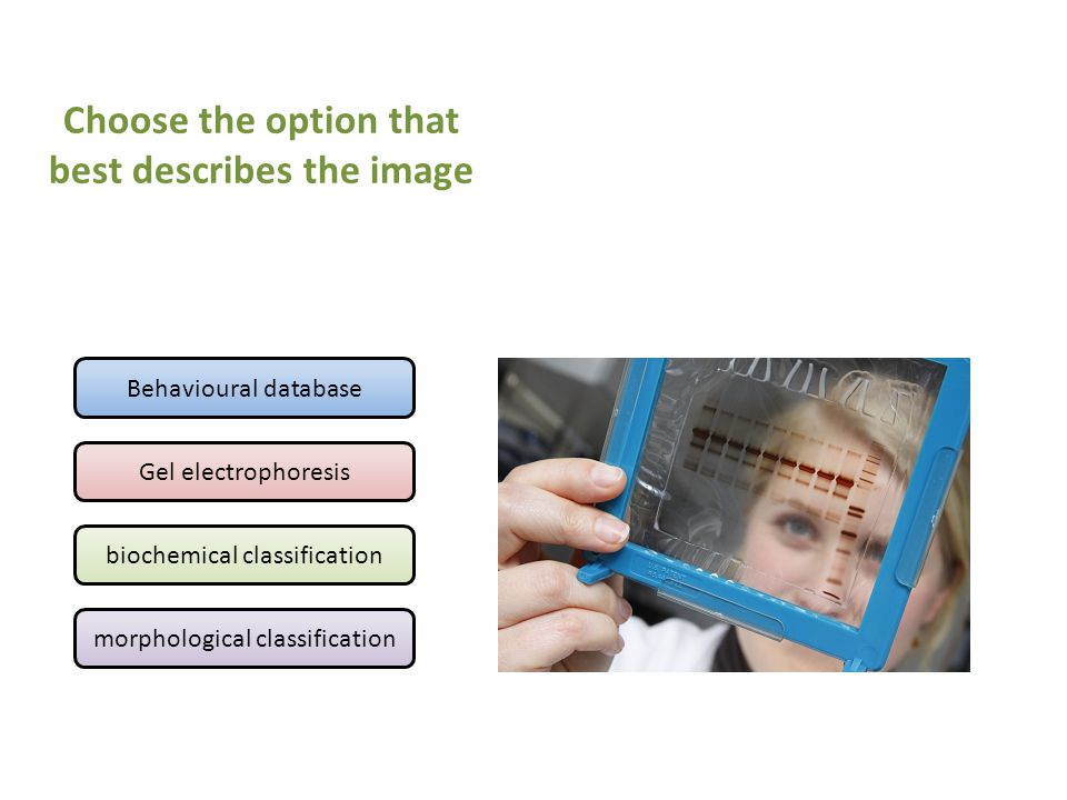 Behavioural database Gel electrophoresis biochemical classification morphological classification Choose the option that best describes the image