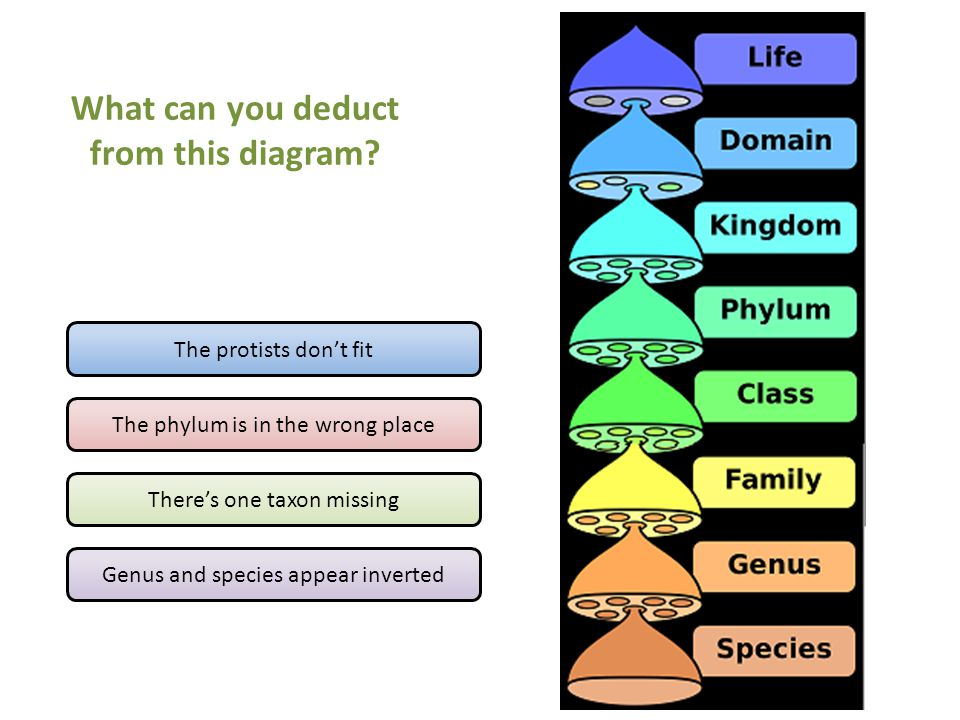 The protists don't fit The phylum is in the wrong place There's one taxon missing Genus and species appear inverted