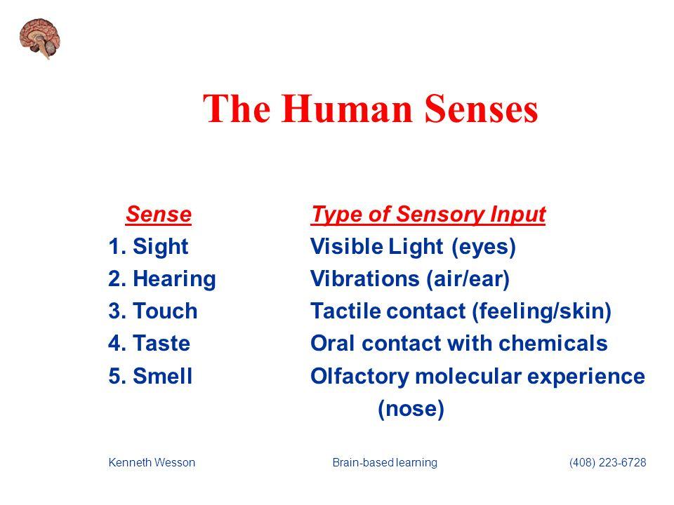 19 Human Senses SenseType of Sensory Input 6.BalanceKinesthetic geotropic (coordination) 7.
