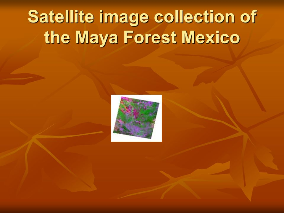 Satellite image collection of the Maya Forest Mexico