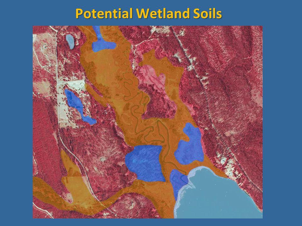 Potential Wetland Soils
