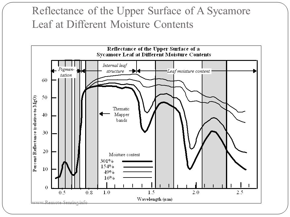 Reflectance of the Upper Surface of A Sycamore Leaf at Different Moisture Contents www.Remote-Sensing.info