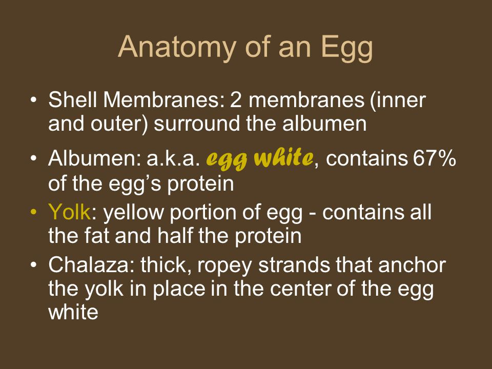 Anatomy of an Egg Shell Membranes: 2 membranes (inner and outer) surround the albumen Albumen: a.k.a. egg white, contains 67% of the egg's protein Yol