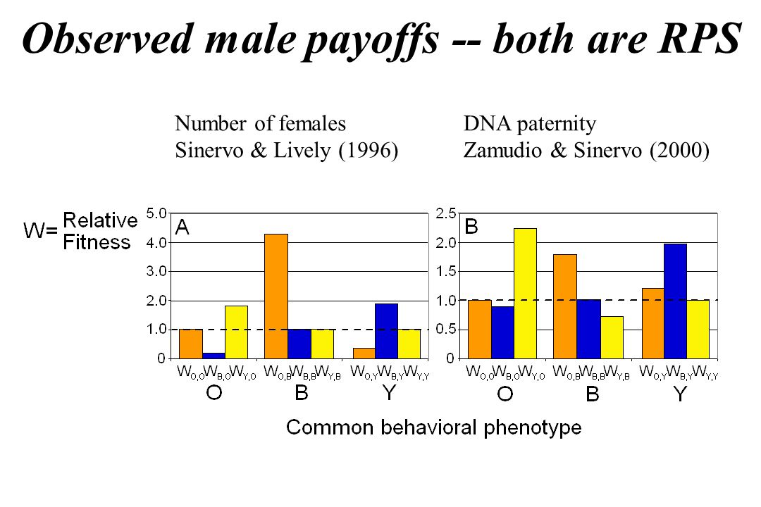 Observed male payoffs -- both are RPS Number of females Sinervo & Lively (1996) DNA paternity Zamudio & Sinervo (2000)