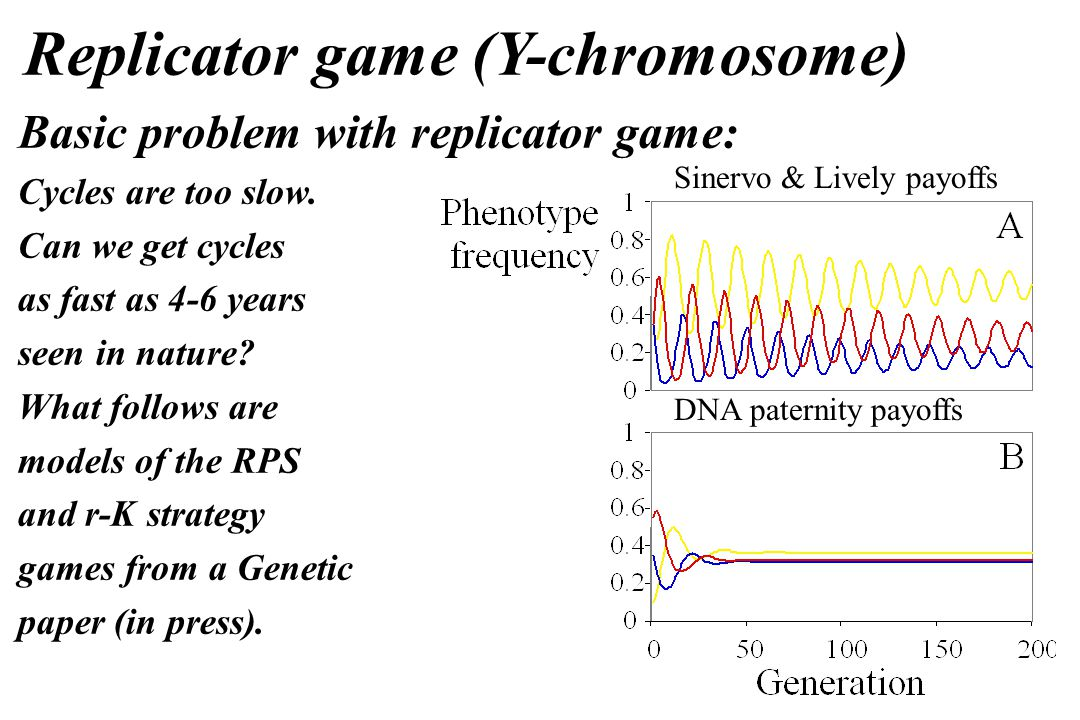 Replicator game (Y-chromosome) Basic problem with replicator game: Cycles are too slow.