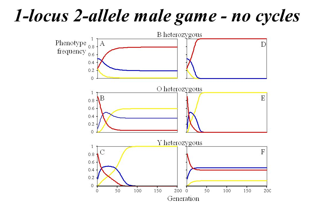 1-locus 2-allele male game - no cycles