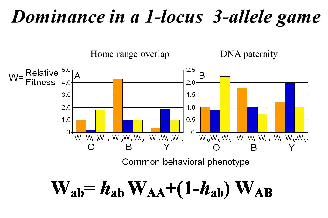 Dominance in a 1-locus 3-allele game Home range overlapDNA paternity