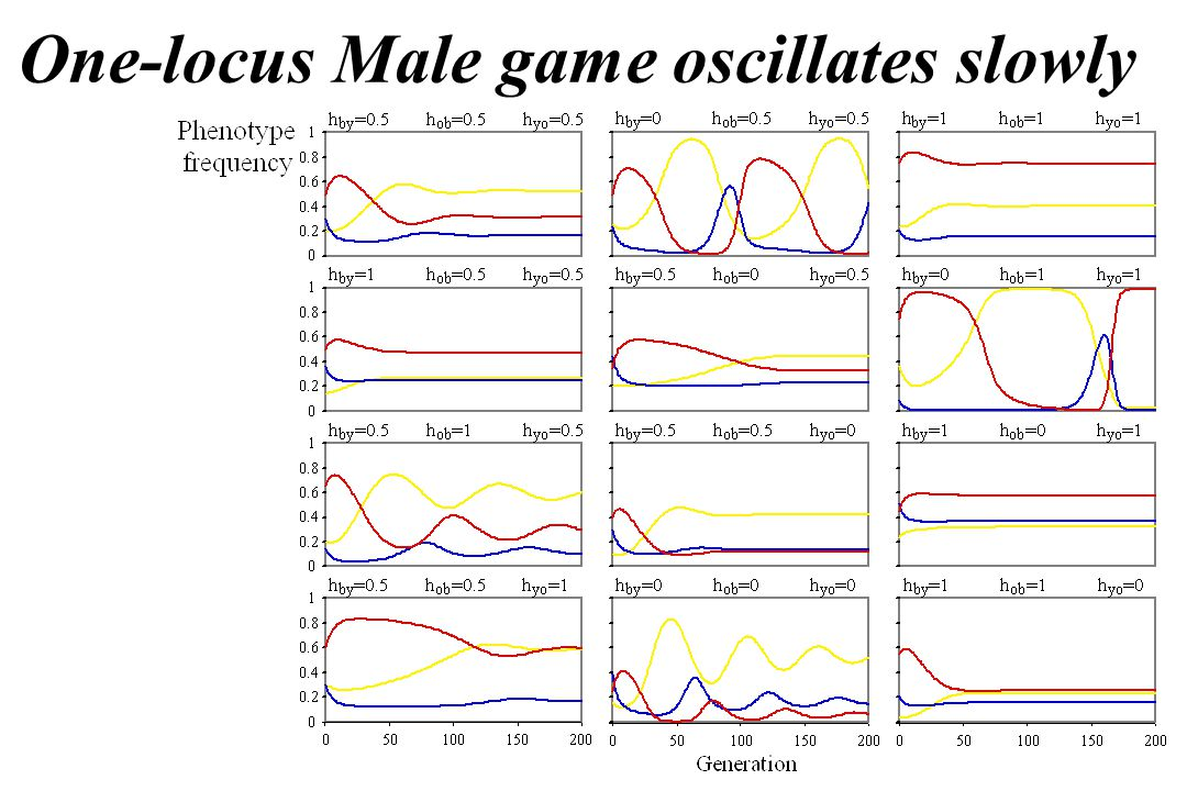 One-locus Male game oscillates slowly