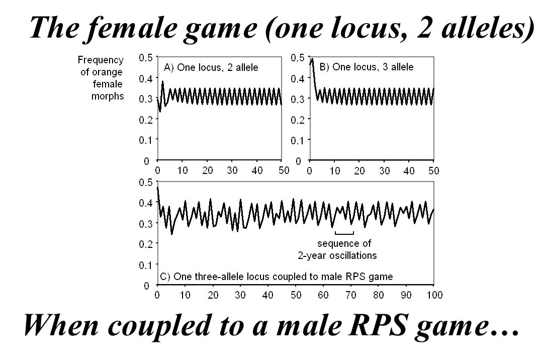 The female game (one locus, 2 alleles) When coupled to a male RPS game…