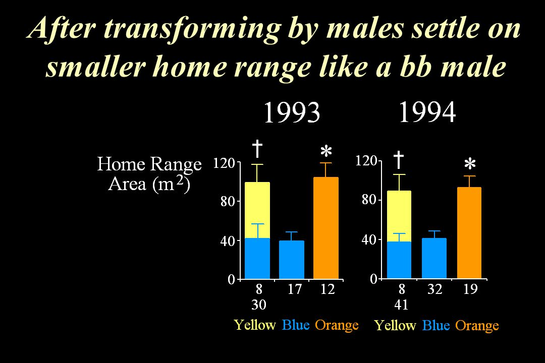 After transforming by males settle on smaller home range like a bb male