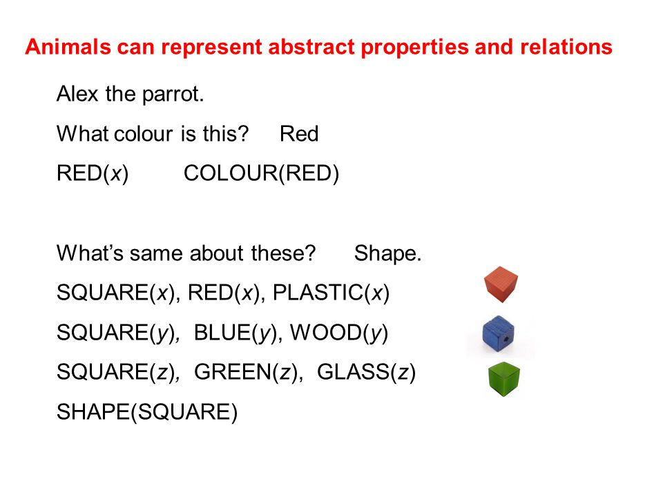 Animals can represent abstract properties and relations Alex the parrot.