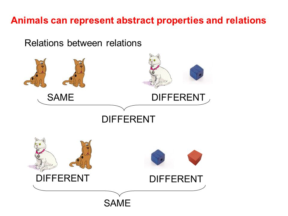 Animals can represent abstract properties and relations Relations between relations SAMEDIFFERENT SAME