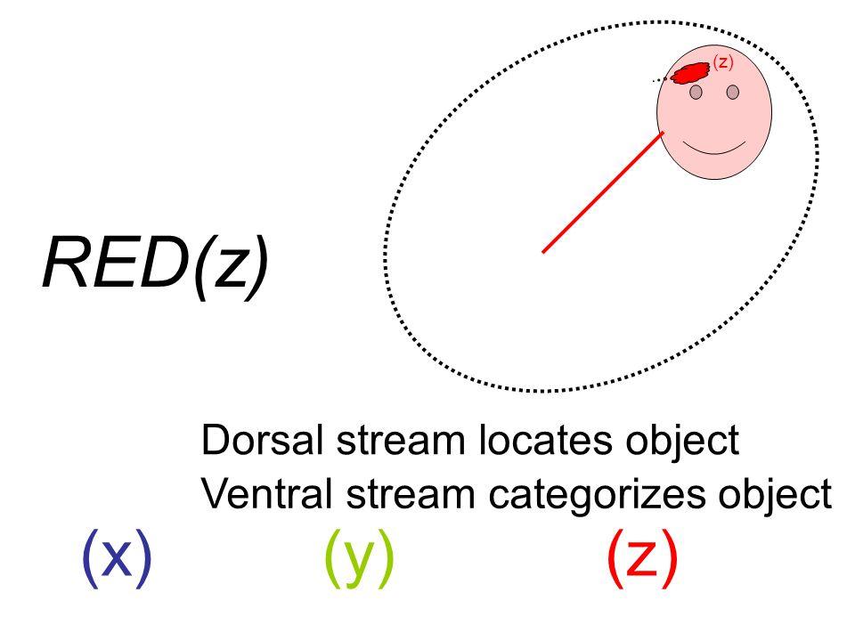 (x)(y)(z) Dorsal stream locates object Ventral stream categorizes object RED(z)