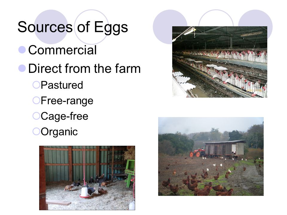 To Wash or Not to Wash.Commercial eggs do not need to be washed.