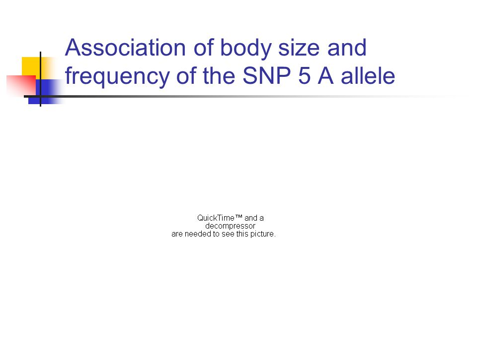 Association of body size and frequency of the SNP 5 A allele