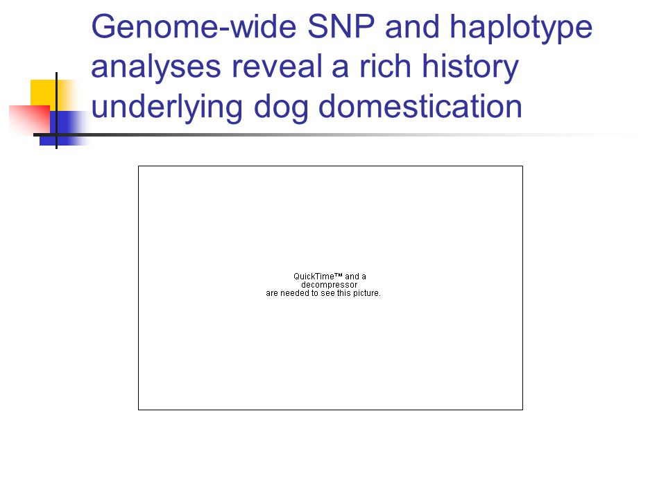 Genome-wide SNP and haplotype analyses reveal a rich history underlying dog domestication