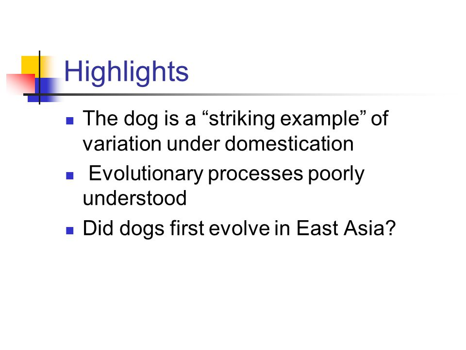 Highlights The dog is a striking example of variation under domestication Evolutionary processes poorly understood Did dogs first evolve in East Asia