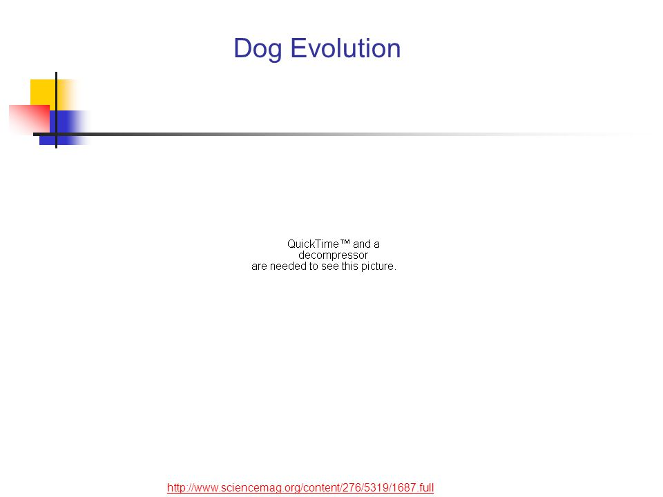 http://www.sciencemag.org/content/276/5319/1687.full Dog Evolution