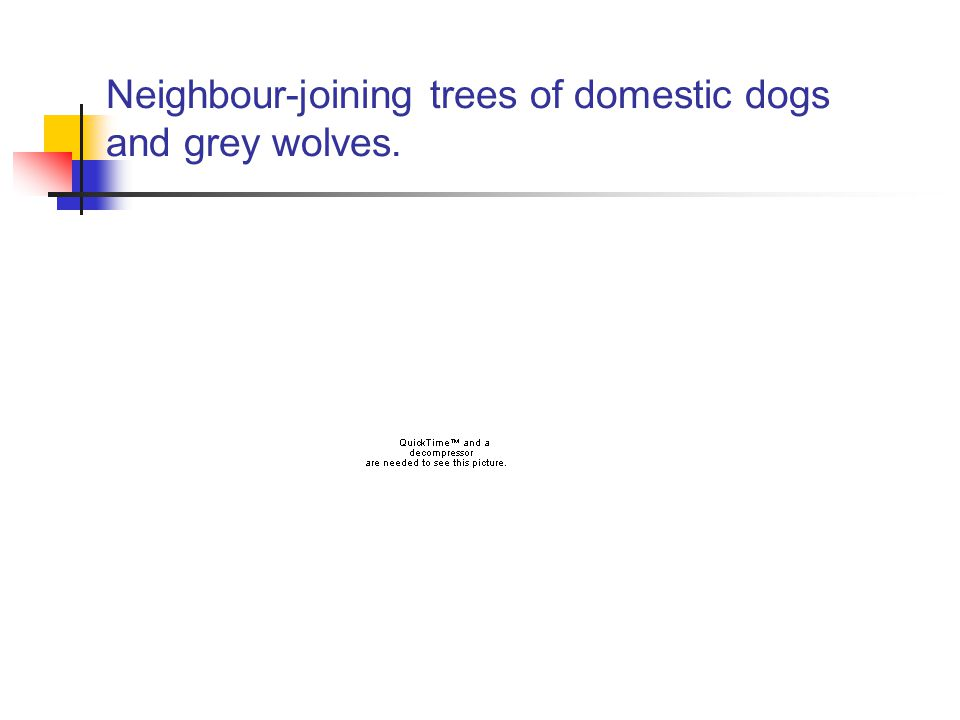 Neighbour-joining trees of domestic dogs and grey wolves.