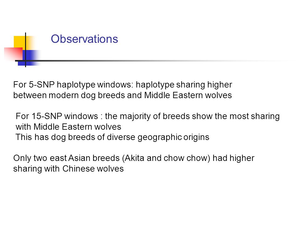 For 5-SNP haplotype windows: haplotype sharing higher between modern dog breeds and Middle Eastern wolves For 15-SNP windows : the majority of breeds show the most sharing with Middle Eastern wolves This has dog breeds of diverse geographic origins Only two east Asian breeds (Akita and chow chow) had higher sharing with Chinese wolves Observations