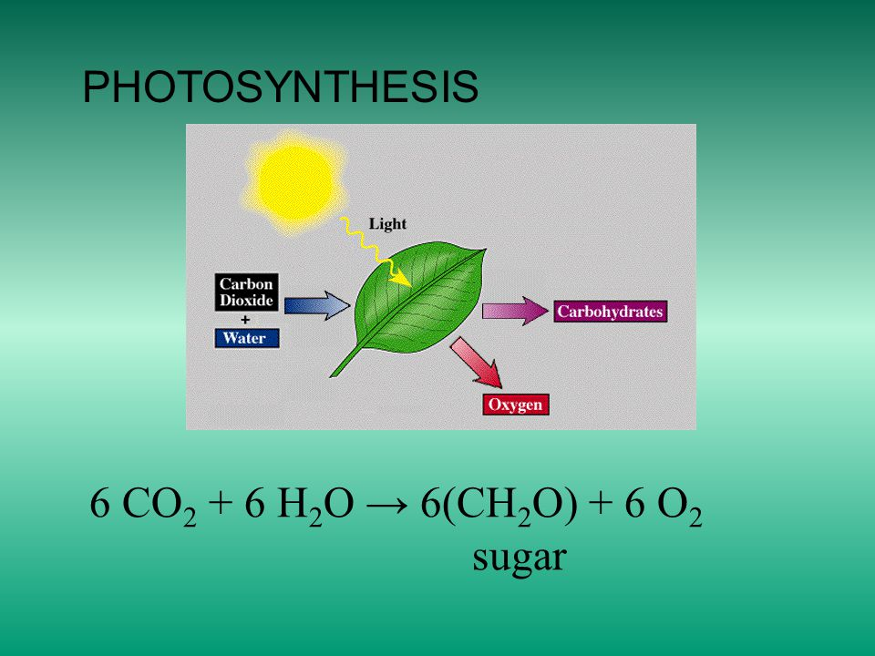 PHOTOSYNTHESIS 6 CO 2 + 6 H 2 O → 6(CH 2 O) + 6 O 2 sugar