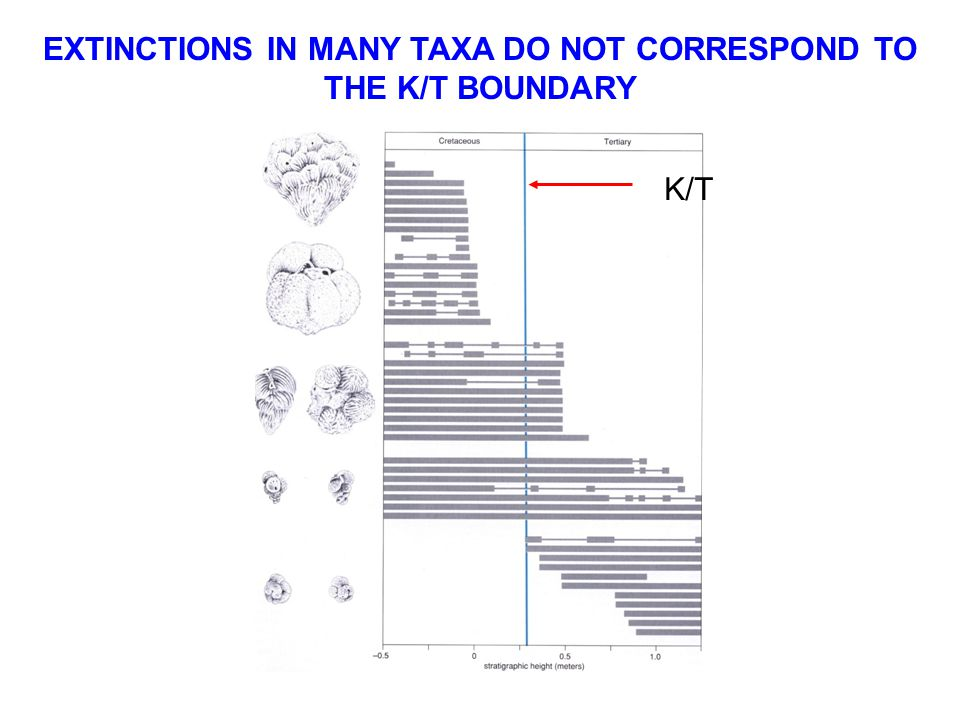 EXTINCTIONS IN MANY TAXA DO NOT CORRESPOND TO THE K/T BOUNDARY K/T