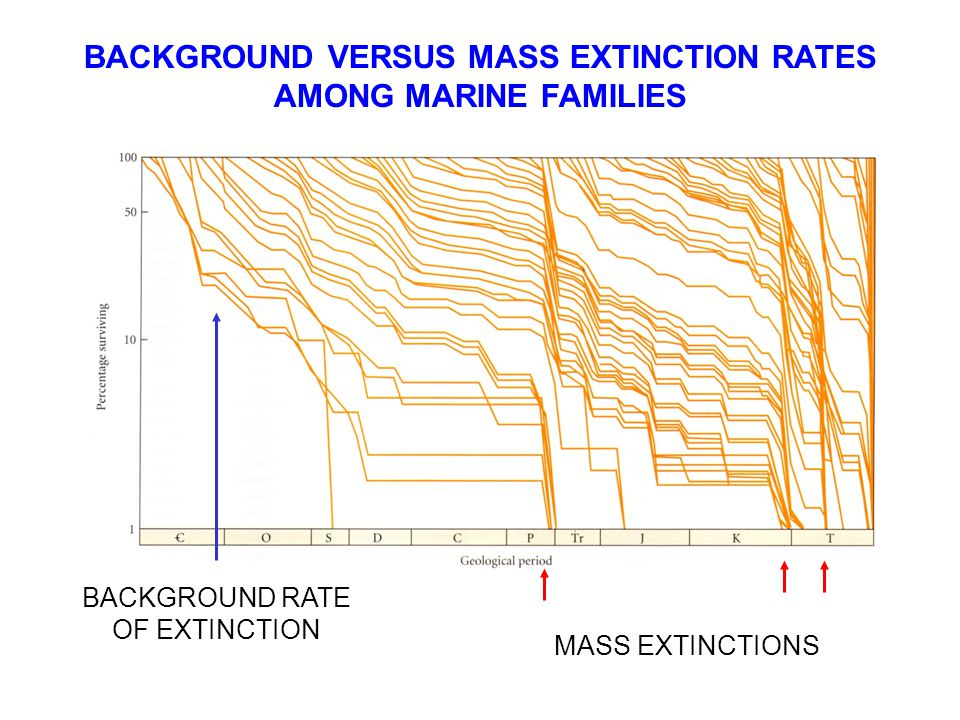 BACKGROUND VERSUS MASS EXTINCTION RATES AMONG MARINE FAMILIES BACKGROUND RATE OF EXTINCTION MASS EXTINCTIONS
