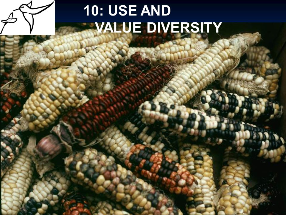 10: USE AND VALUE DIVERSITY