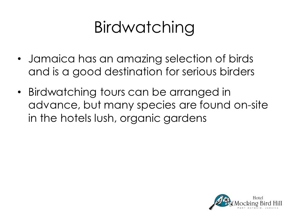 Birdwatching Jamaica has an amazing selection of birds and is a good destination for serious birders Birdwatching tours can be arranged in advance, but many species are found on-site in the hotels lush, organic gardens