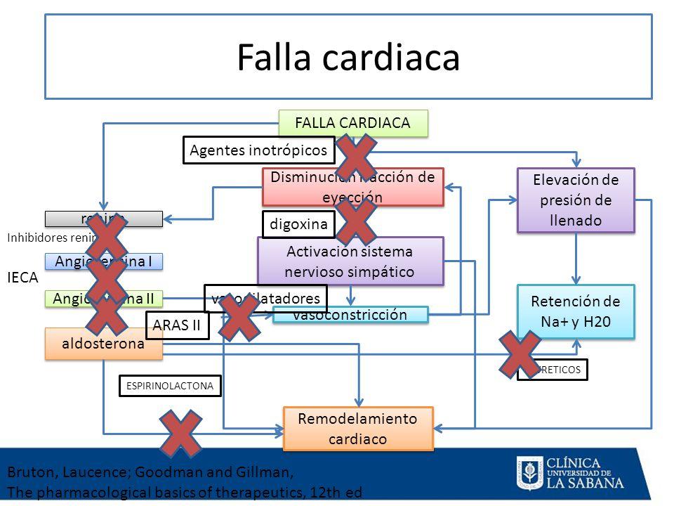 Falla cardiaca FALLA CARDIACA Disminución fracción de eyección Activación sistema nervioso simpático vasoconstricción renina Angiotensina I Angiotensina II aldosterona Elevación de presión de llenado Retención de Na+ y H20 Remodelamiento cardiaco Agentes inotrópicos digoxina vasodilatadores Inhibidores renina IECA ARAS II ESPIRINOLACTONA DIURETICOS Bruton, Laucence; Goodman and Gillman, The pharmacological basics of therapeutics, 12th ed