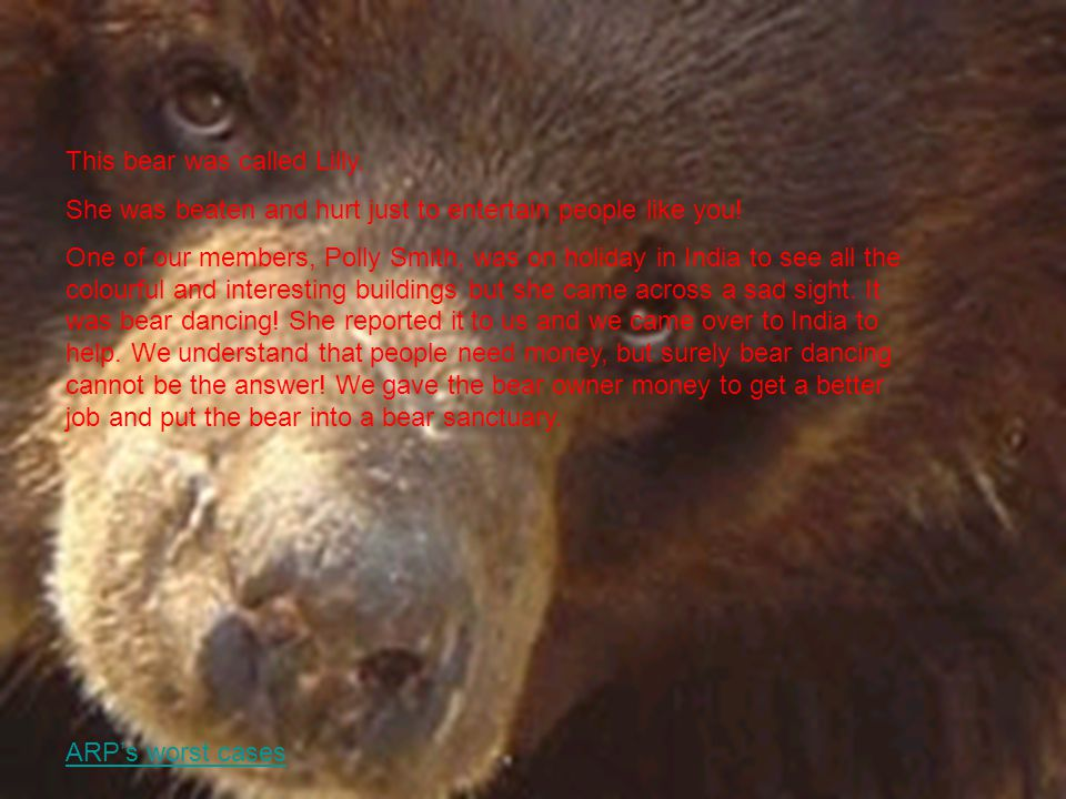 This bear was called Lilly. She was beaten and hurt just to entertain people like you.