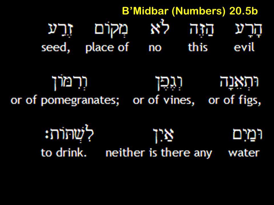 B'Midbar (Numbers) 20.5b