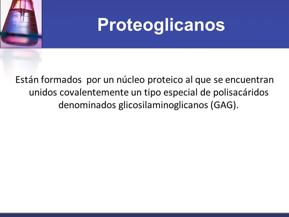 Proteoglicanos Están formados por un núcleo proteico al que se encuentran unidos covalentemente un tipo especial de polisacáridos denominados glicosil
