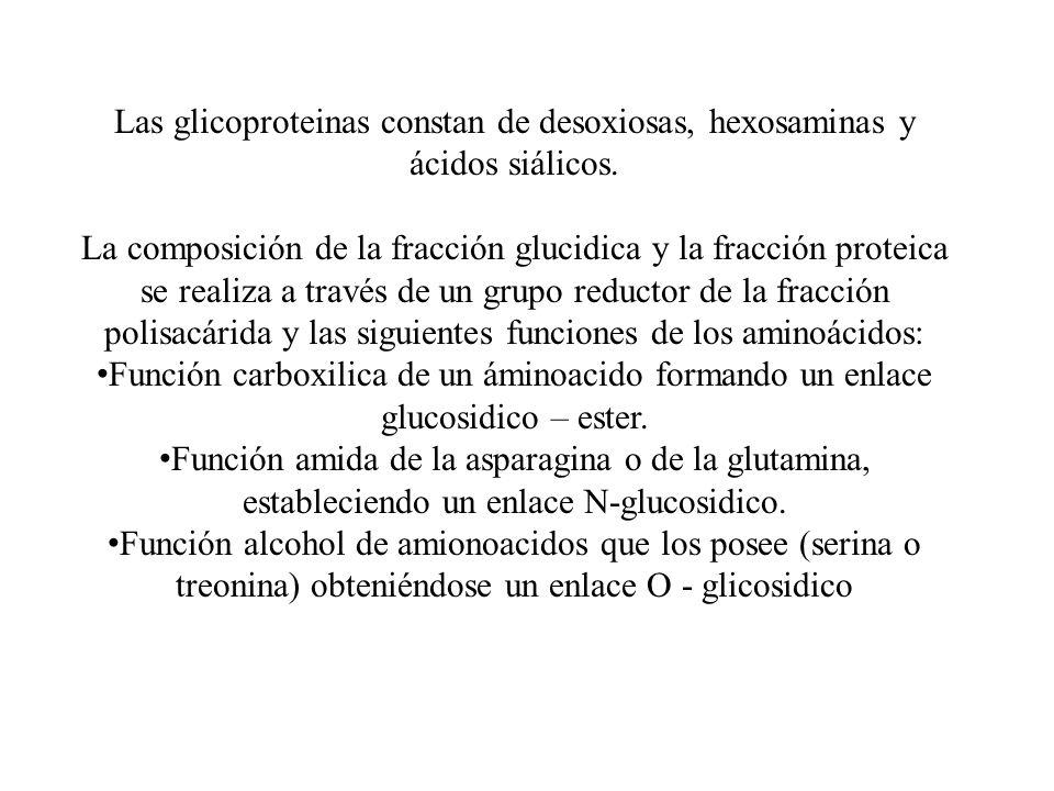 Las glicoproteinas constan de desoxiosas, hexosaminas y ácidos siálicos. La composición de la fracción glucidica y la fracción proteica se realiza a t
