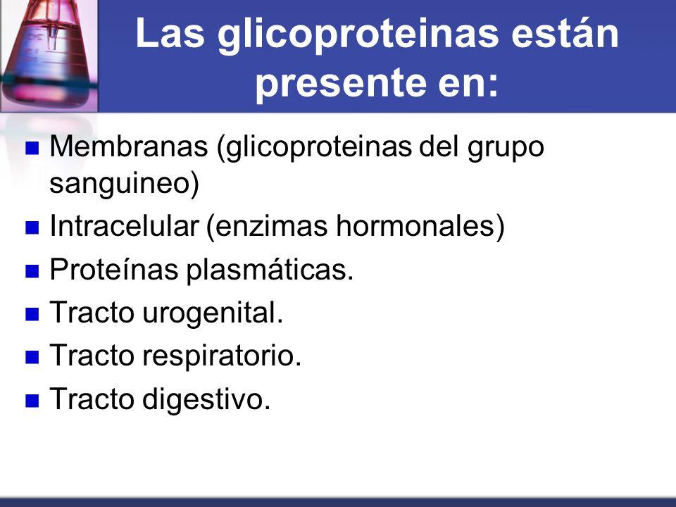 Las glicoproteinas están presente en: Membranas (glicoproteinas del grupo sanguineo) Intracelular (enzimas hormonales) Proteínas plasmáticas. Tracto u