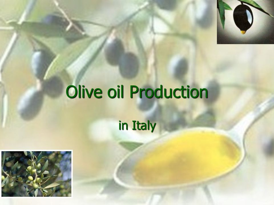 Olive oil Production in Italy