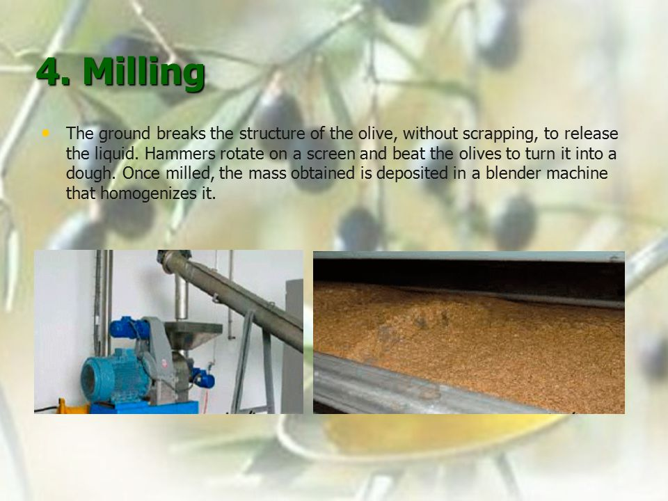 4. Milling The ground breaks the structure of the olive, without scrapping, to release the liquid.