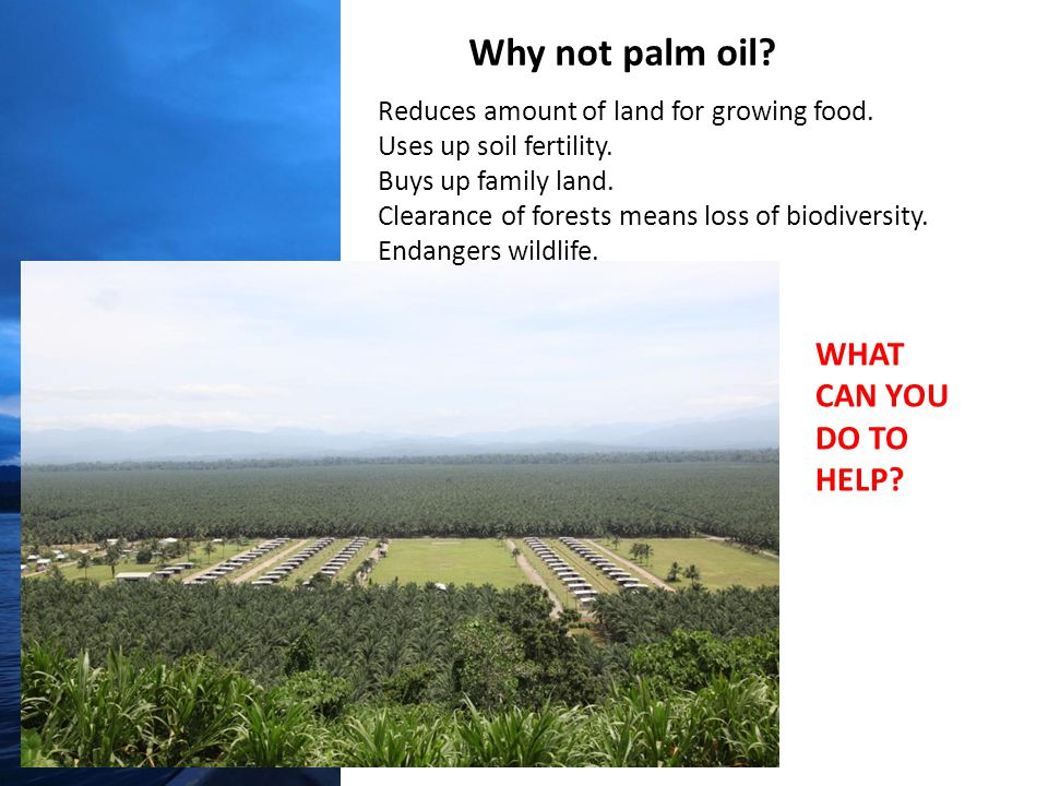 Why not palm oil. Reduces amount of land for growing food.