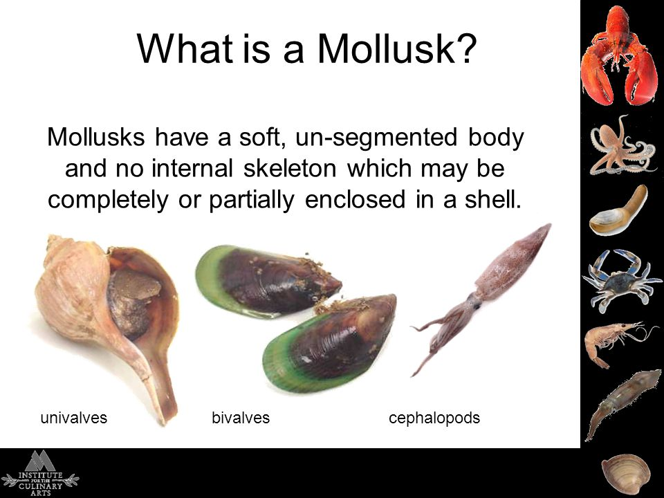 What is a Mollusk.