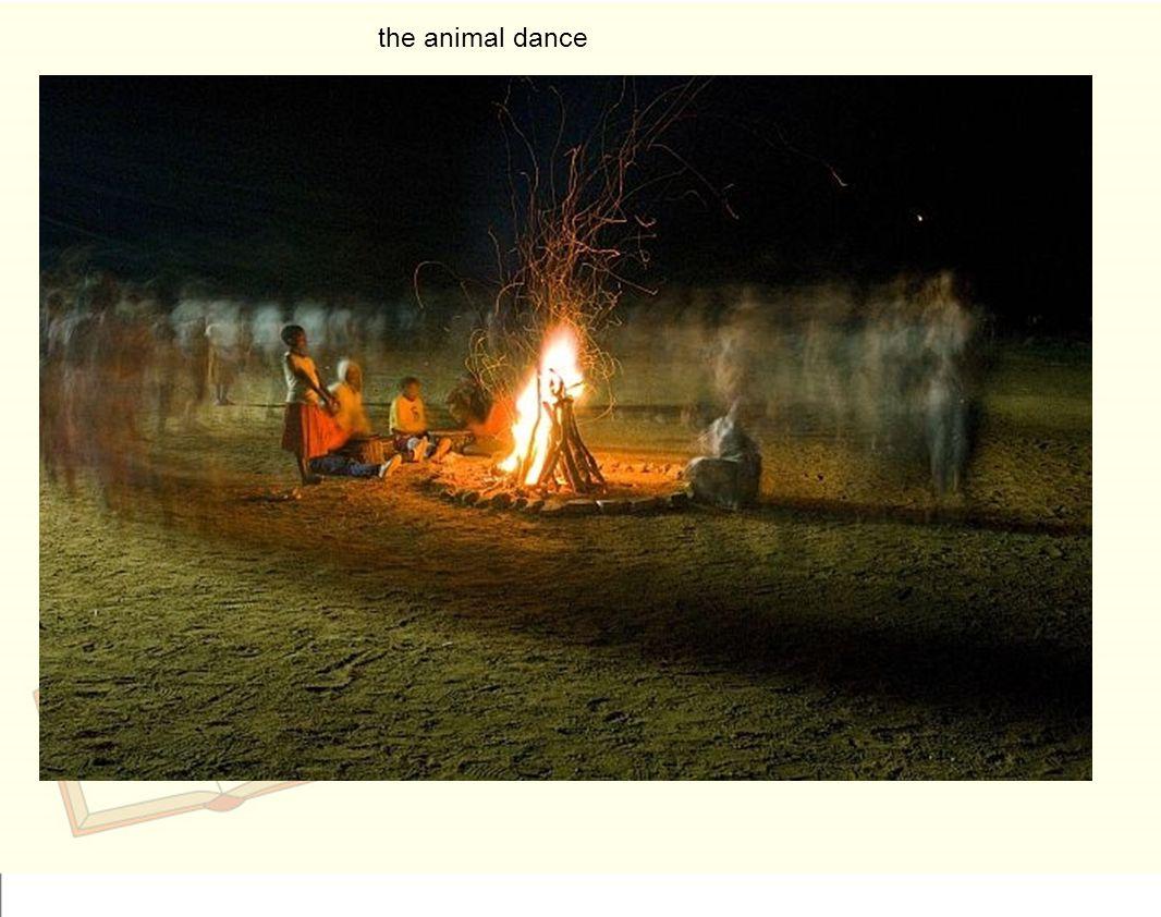 the animal dance