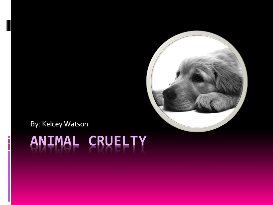 Animal abuse is cruel and wrong.