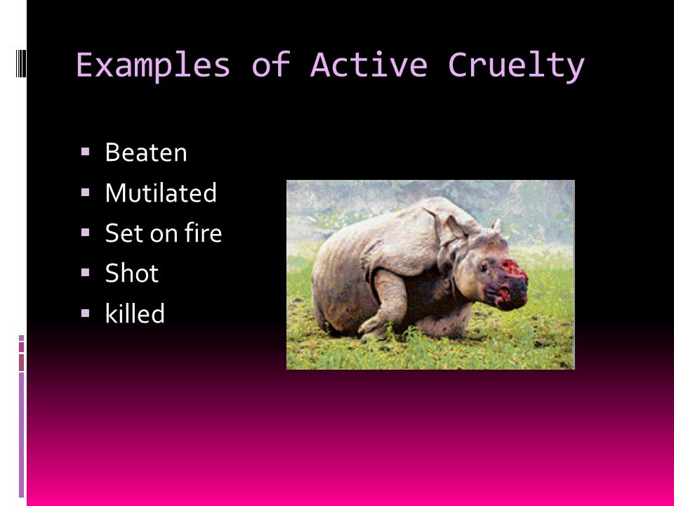 Examples of Active Cruelty  Beaten  Mutilated  Set on fire  Shot  killed