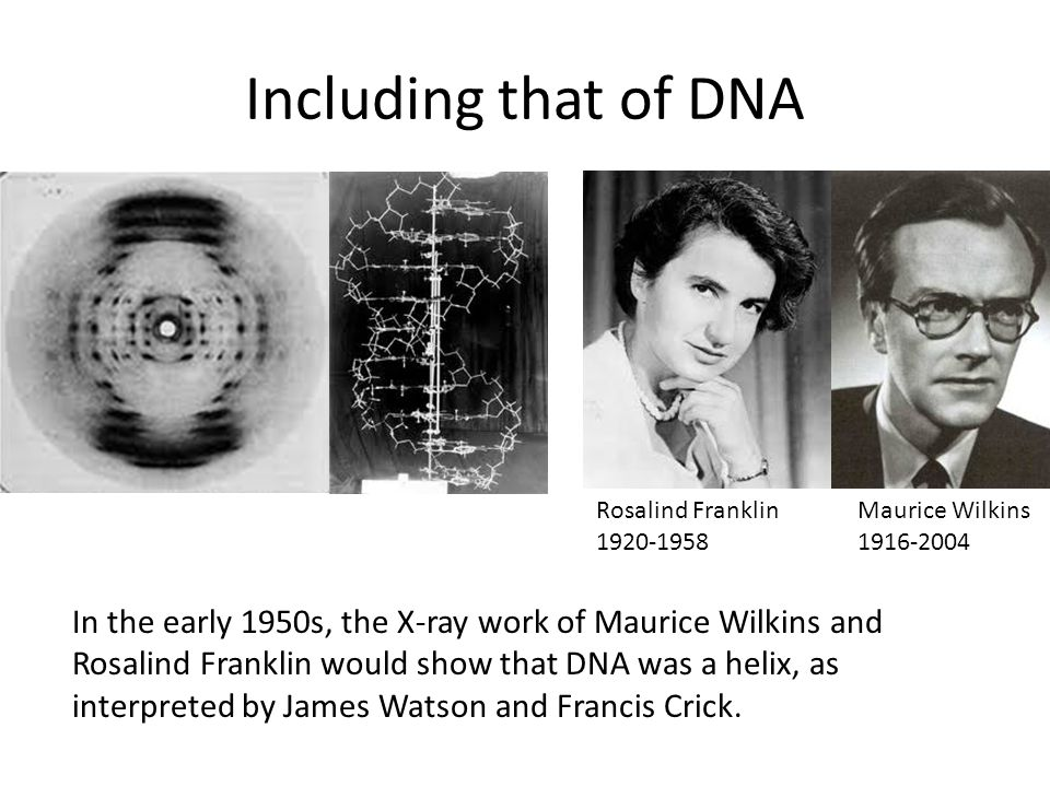Including that of DNA In the early 1950s, the X-ray work of Maurice Wilkins and Rosalind Franklin would show that DNA was a helix, as interpreted by J