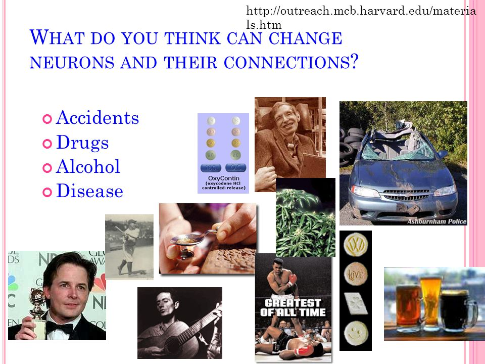 W HAT DO YOU THINK CAN CHANGE NEURONS AND THEIR CONNECTIONS ? Accidents Drugs Alcohol Disease http://outreach.mcb.harvard.edu/materia ls.htm