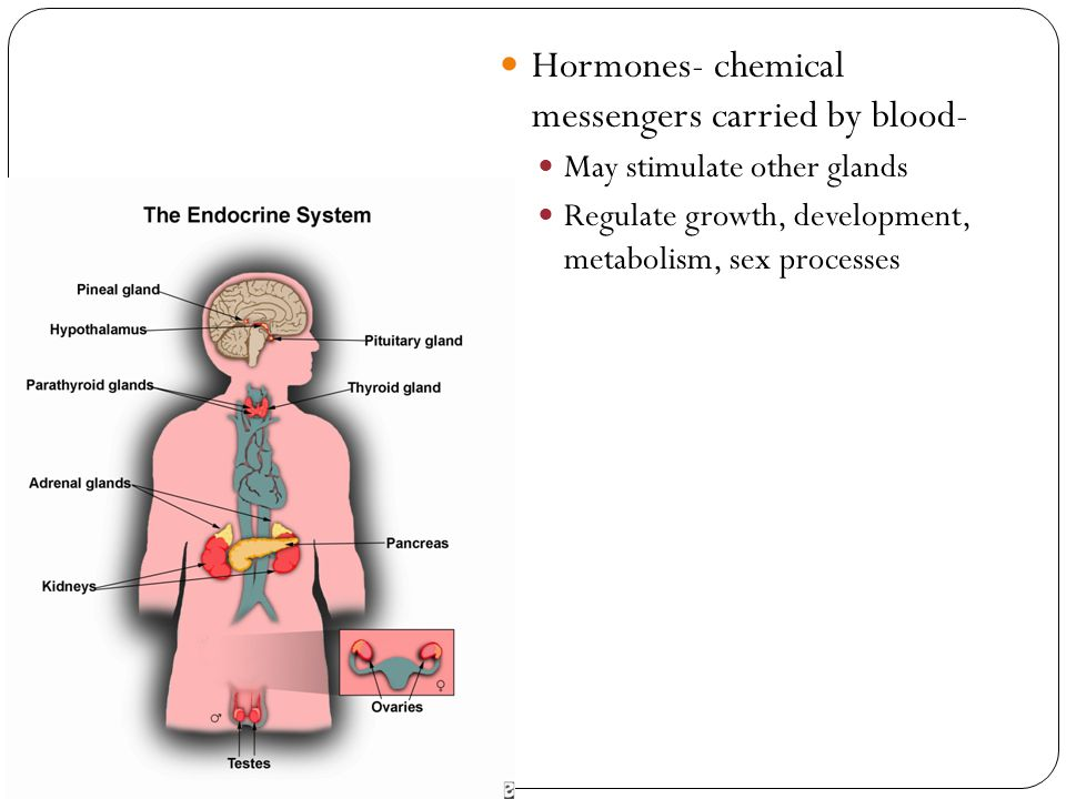 Hormones- chemical messengers carried by blood- May stimulate other glands Regulate growth, development, metabolism, sex processes