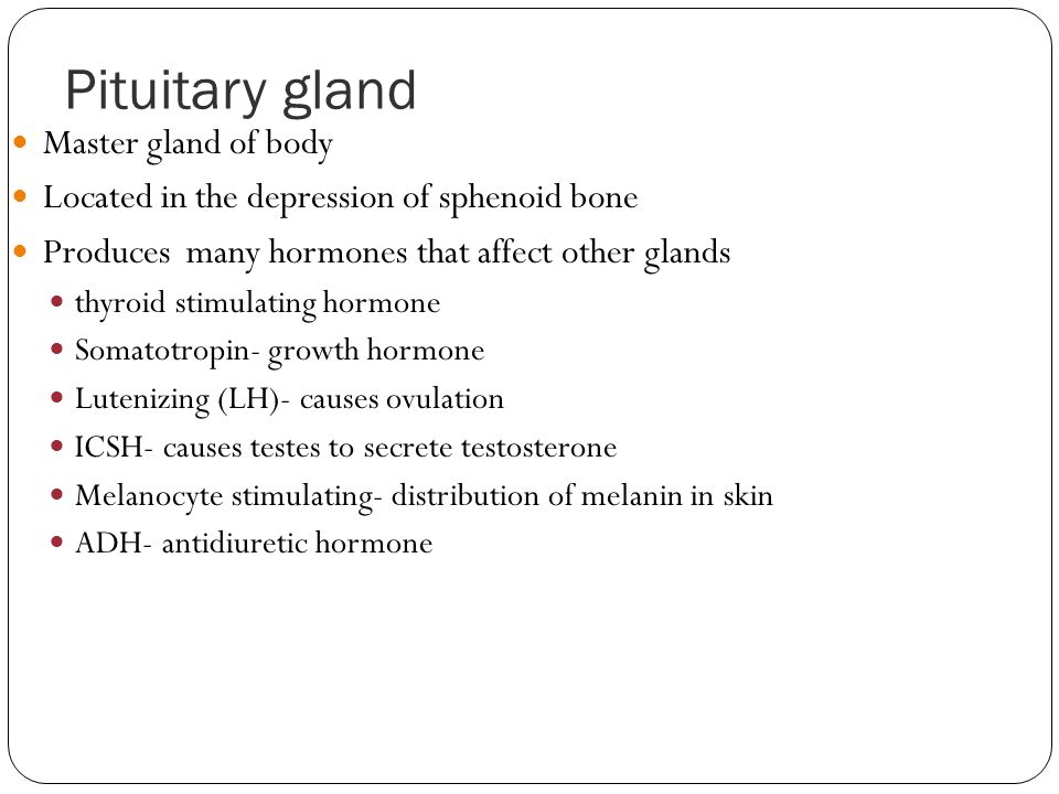 Pituitary gland Master gland of body Located in the depression of sphenoid bone Produces many hormones that affect other glands thyroid stimulating ho