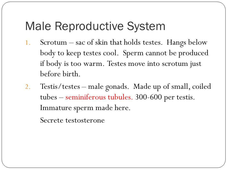 Male Reproductive System 1. Scrotum – sac of skin that holds testes. Hangs below body to keep testes cool. Sperm cannot be produced if body is too war