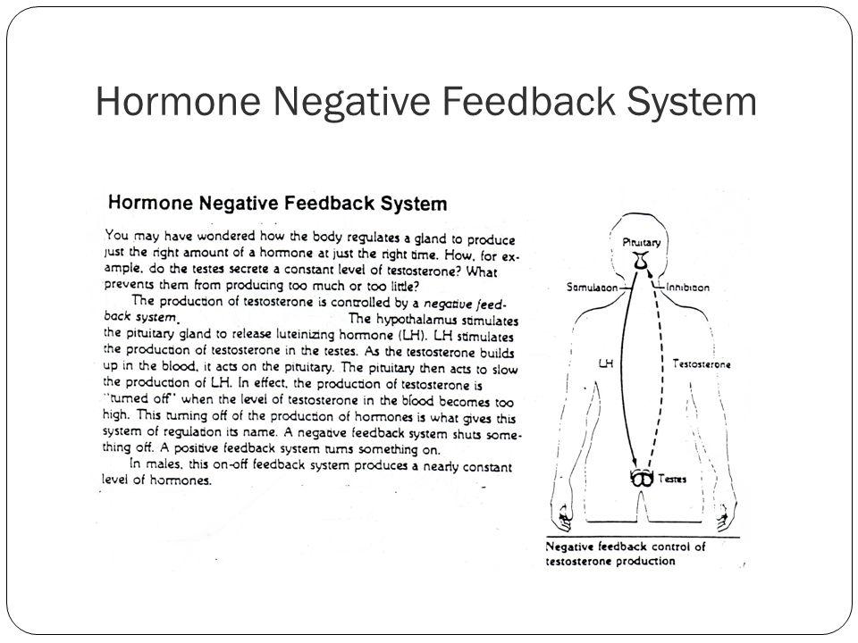 Hormone Negative Feedback System