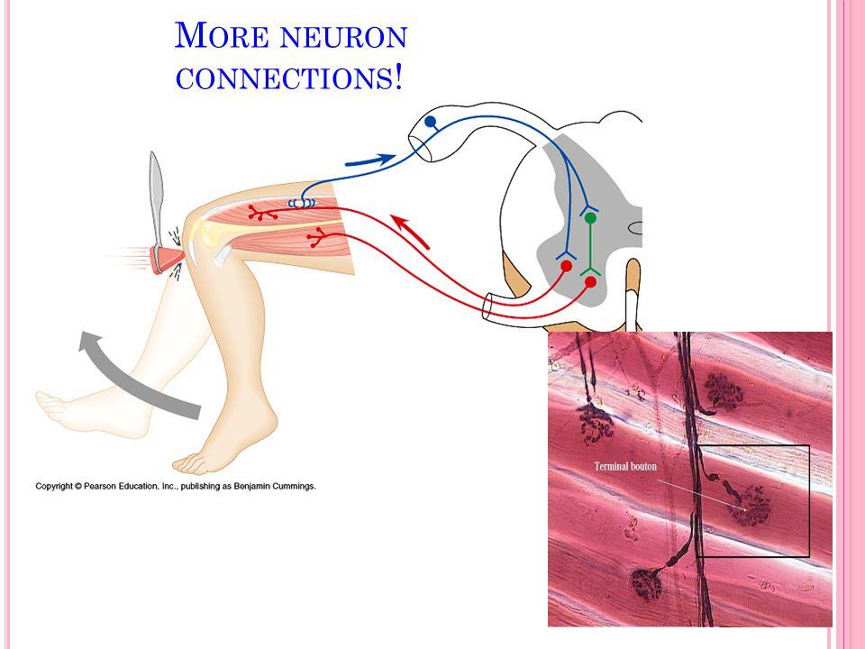 M ORE NEURON CONNECTIONS !