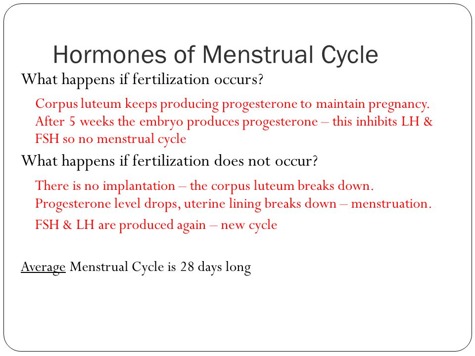 Hormones of Menstrual Cycle What happens if fertilization occurs? Corpus luteum keeps producing progesterone to maintain pregnancy. After 5 weeks the